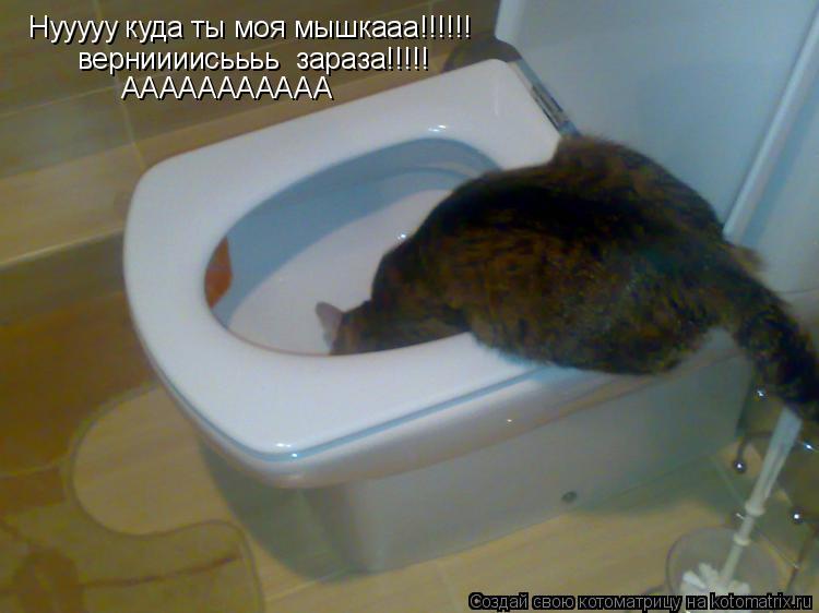 Котоматрица: Нууууу куда ты моя мышкааа!!!!!! верниииисьььь  зараза!!!!! ААААААААААА