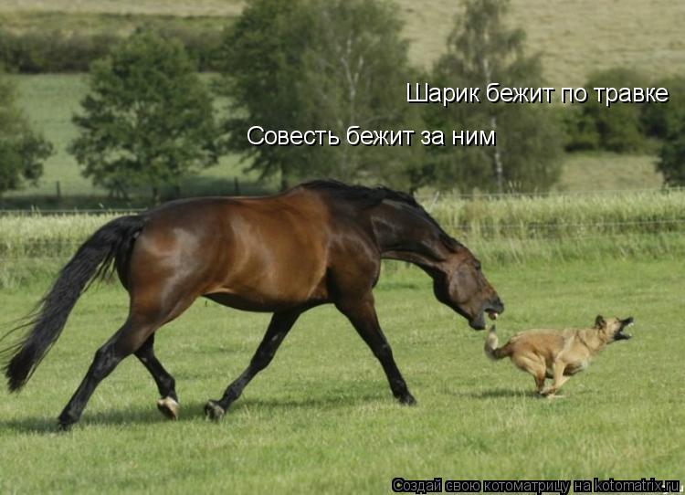 Котоматрица: Шарик бежит по травке Совесть бежит за ним