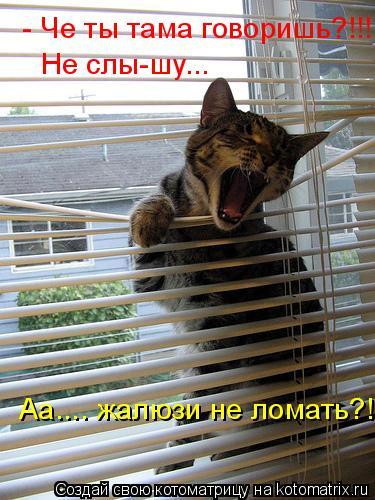 Котоматрица: - Че ты тама говоришь?!!! Не слы-шу... Аа.... жалюзи не ломать?!