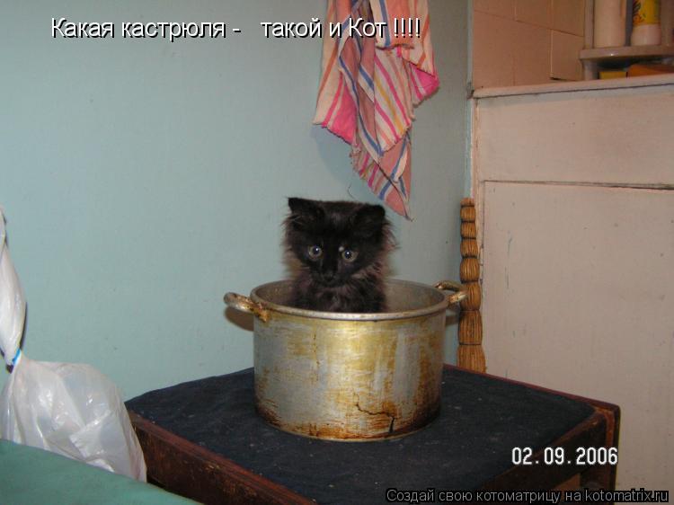 Котоматрица: Какая кастрюля -   такой и Кот !!!!