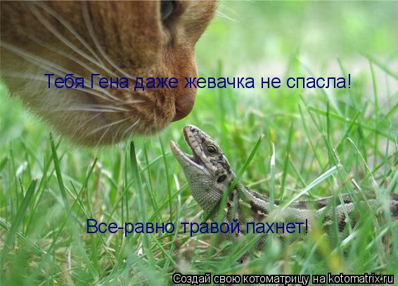 Котоматрица: Тебя Гена даже жевачка не спасла! Все-равно травой пахнет!