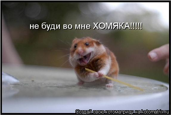 Котоматрица: не буди во мне ХОМЯКА!!!!!