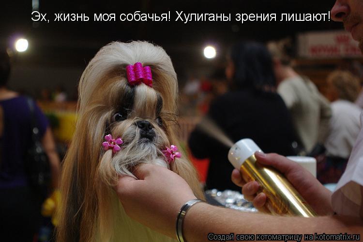 Котоматрица: Эх, жизнь моя собачья! Хулиганы зрения лишают!