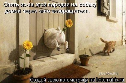 Котоматрица: Опять из-за этой пародии на собаку домой через окно возвращаться.