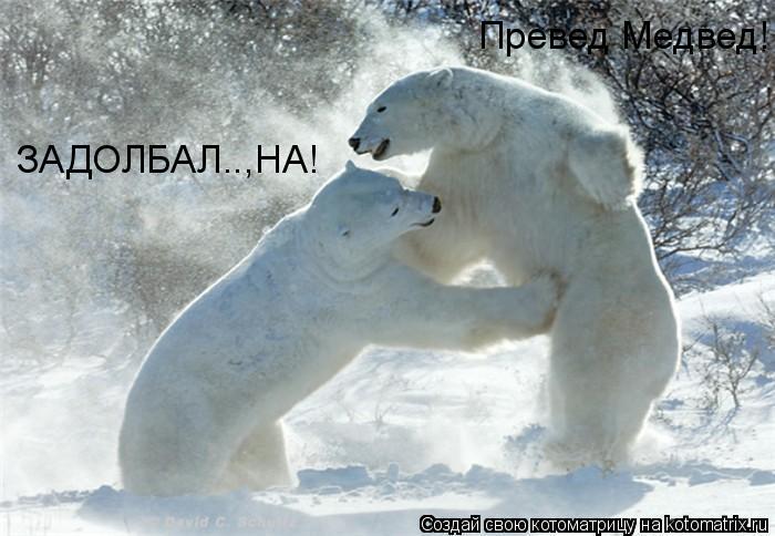 Котоматрица: Превед Медвед! ЗАДОЛБАЛ..,НА!