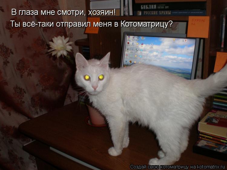 Котоматрица: В глаза мне смотри, хозяин! Ты всё-таки отправил меня в Котоматрицу?