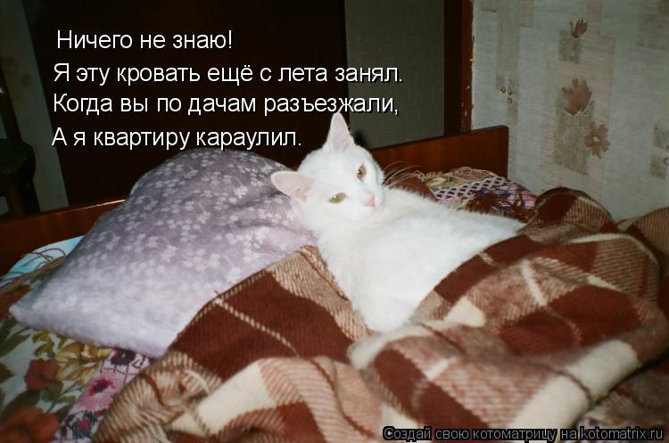 Котоматрица: Ничего не знаю! Я эту кровать ещё с лета занял. Когда вы по дачам разъезжали, А я квартиру караулил.