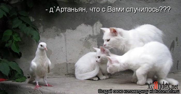 Котоматрица: - д`Артаньян, что с Вами случилось???