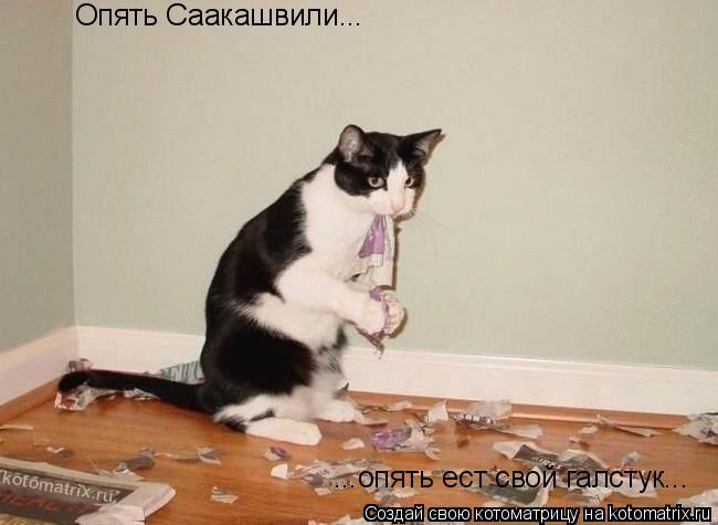 Котоматрица: Опять Саакашвили... ...опять ест свой галстук...
