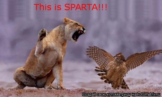 Котоматрица: This is SPARTA!!! This is SPARTA!!!