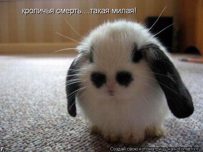 Котоматрица: кроличья смерть....такая милая!