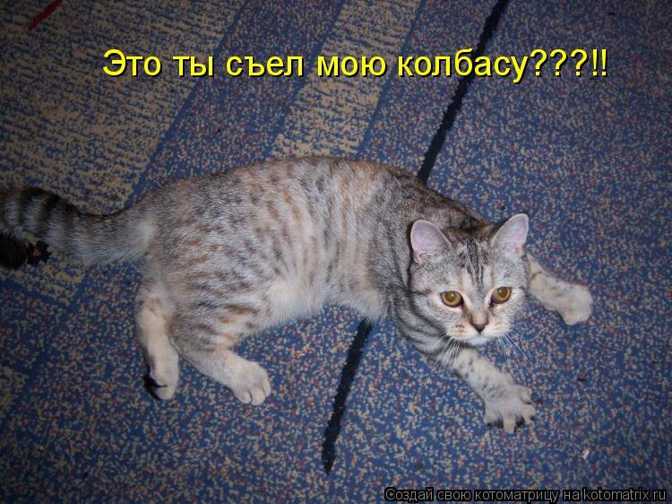 Котоматрица: Это ты съел мою колбасу???!!