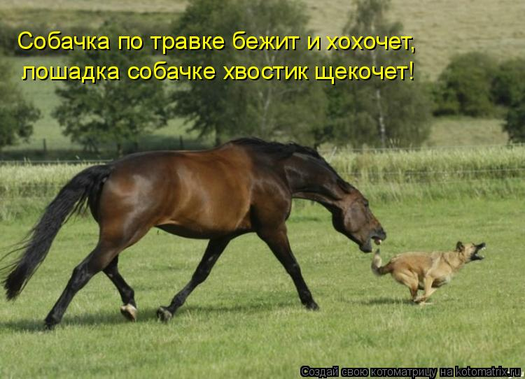 Котоматрица: Собачка по травке бежит и хохочет, лошадка собачке хвостик щекочет!