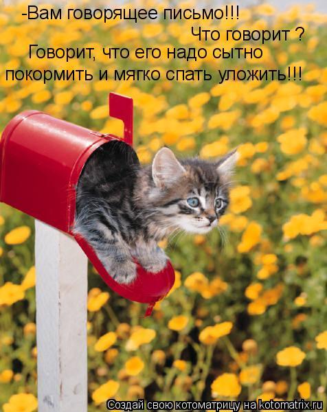 Котоматрица: -Вам говорящее письмо!!! Что говорит ?  Говорит, что его надо сытно  покормить и мягко спать уложить!!!