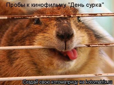 """Котоматрица: Пробы к кинофильму """"День сурка"""""""