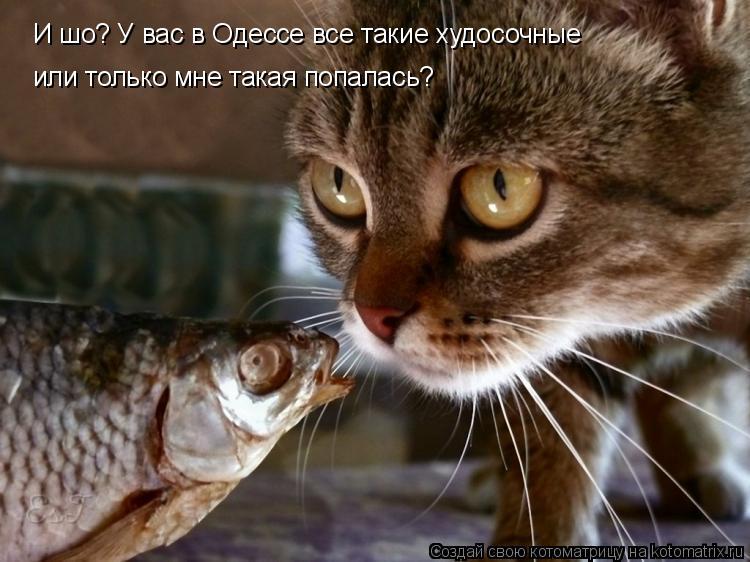 Котоматрица: И шо? У вас в Одессе все такие худосочные  или только мне такая попалась?
