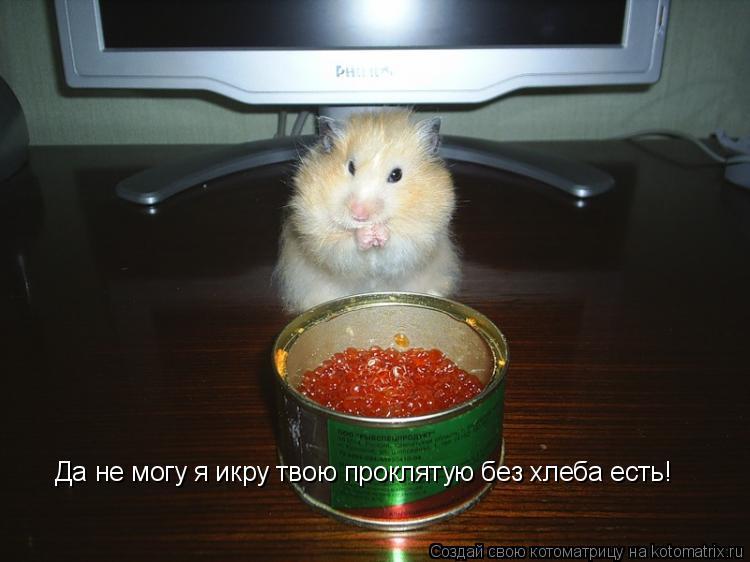 Котоматрица: Да не могу я икру твою проклятую без хлеба есть!