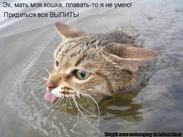 Котоматрица: Эх, мать моя кошка, плавать-то я не умею! Придеться все ВЫПИТЬ!