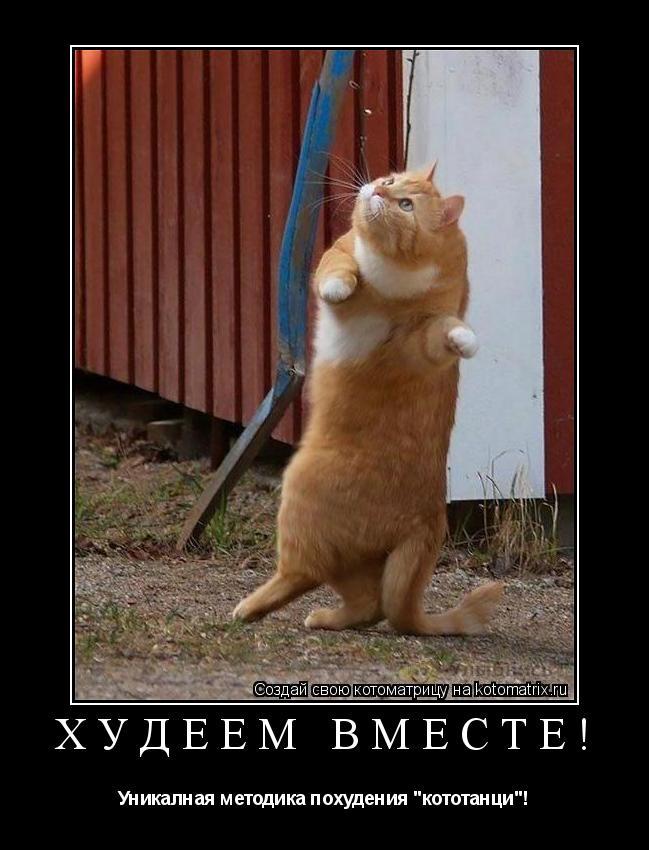 """Котоматрица: Худеем вместе! Уникалная методика похудения """"кототанци""""!"""