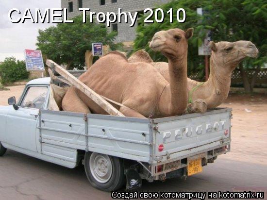 Котоматрица: CAMEL Trophy 2010