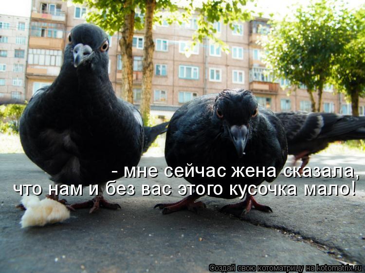Котоматрица: - мне сейчас жена сказала, что нам и без вас этого кусочка мало! что нам и без вас этого кусочка мало!
