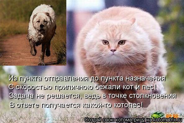 Котоматрица: Из пункта отправления до пункта назначения С скоростью приличною бежали кот и пес! Задача не решается, ведь в точке столкновения В ответе п