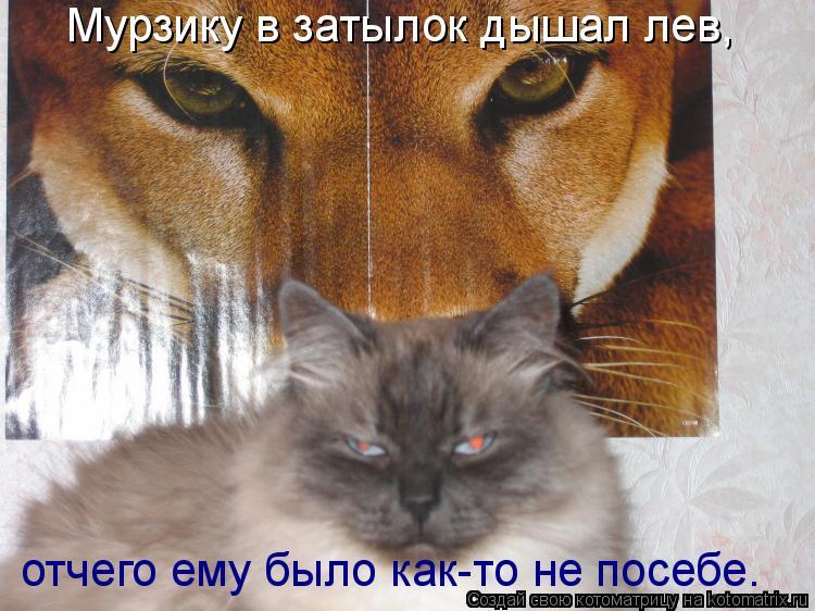 Котоматрица: Мурзику в затылок дышал лев, отчего ему было как-то не посебе.