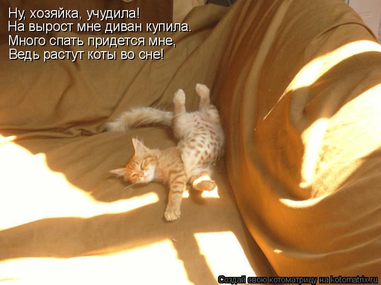 Котоматрица: Ну, хозяйка, учудила! Много спать придется мне, Ведь растут коты во сне! На вырост мне диван купила.