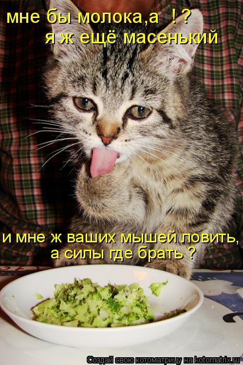 Котоматрица: мне бы молока,а  ! ?  я ж ещё масенький  и мне ж ваших мышей ловить, а силы где брать ?