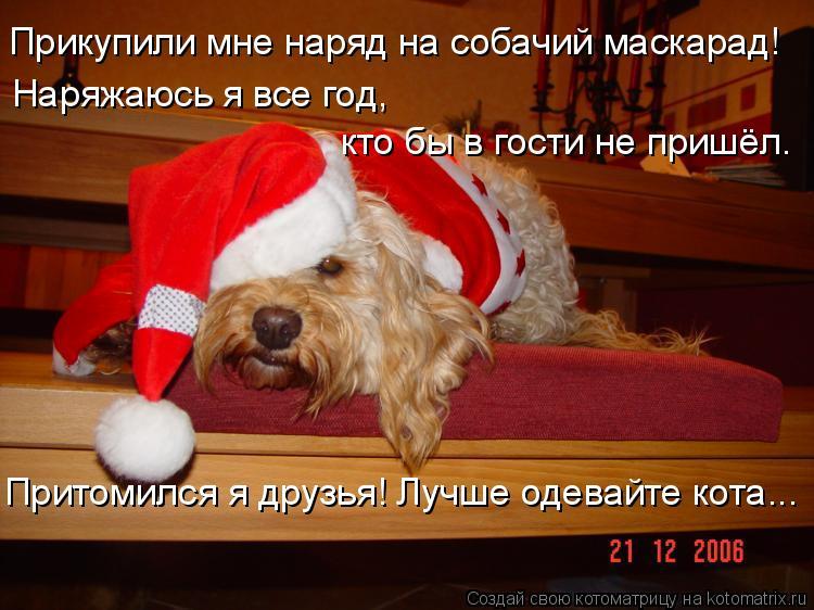 Котоматрица: Прикупили мне наряд на собачий маскарад! Наряжаюсь я все год,  кто бы в гости не пришёл. Притомился я друзья! Лучше одевайте кота...