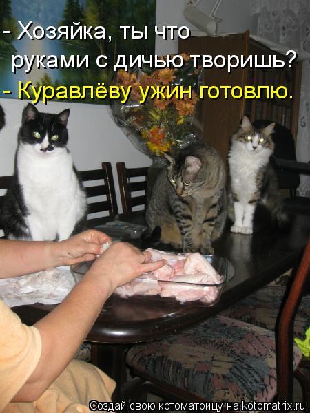 Котоматрица: - Хозяйка, ты что руками с дичью творишь? - Куравлёву ужин готовлю.