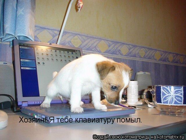 Котоматрица: Хозяин! Я тебе клавиатуру помыл.