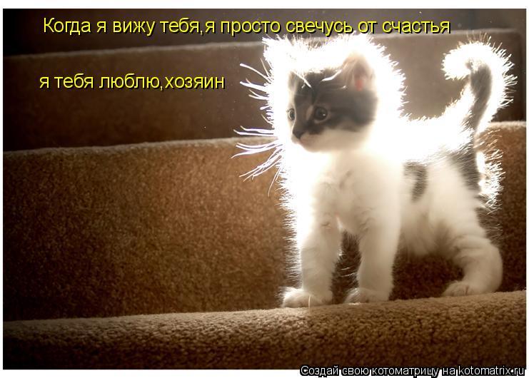 Котоматрица: Когда я вижу тебя,я просто свечусь от счастья я тебя люблю,хозяин