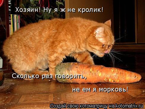 Котоматрица: Хозяин! Ну я ж не кролик! Сколько раз говорить, не ем я морковь!