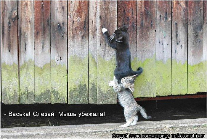 Котоматрица: - Васька! Слезай! Мышь убежала!