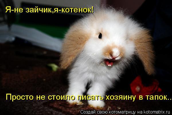 Котоматрица: Просто не стоило писать хозяину в тапок... Я-не зайчик,я-котенок!