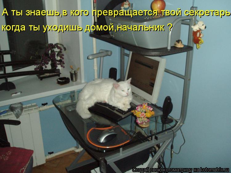 Котоматрица: А ты знаешь,в кого превращается твой секретарь, когда ты уходишь домой,начальник ?