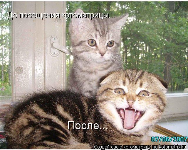 Котоматрица: До посещения котоматрицы... После...