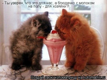 Котоматрица: - Ты уверен, что это для нас, а блюдечко с молоком на полу - для хозяйки?!.