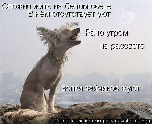 Котоматрица: Сложно жить на белом свете В нём отсутствует уют Рано утром на рассвете волки зайчиков жуют...