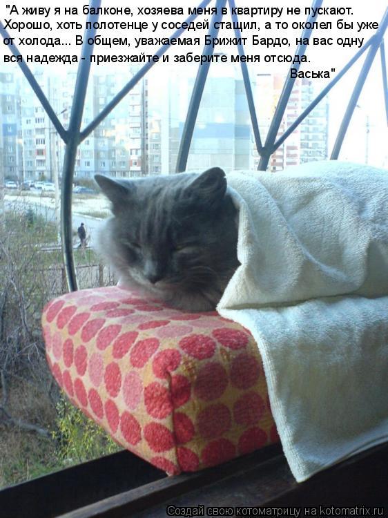 """Котоматрица: """"А живу я на балконе, хозяева меня в квартиру не пускают. Хорошо, хоть полотенце у соседей стащил, а то околел бы уже вся надежда - приезжайте"""