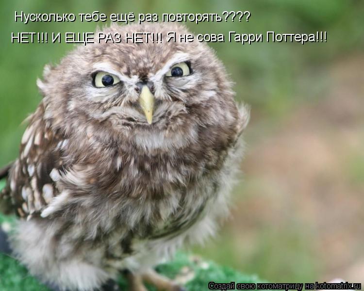 Котоматрица: Нусколько тебе ещё раз повторять???? НЕТ!!! И ЕЩЕ РАЗ НЕТ!!! Я не сова Гарри Поттера!!!
