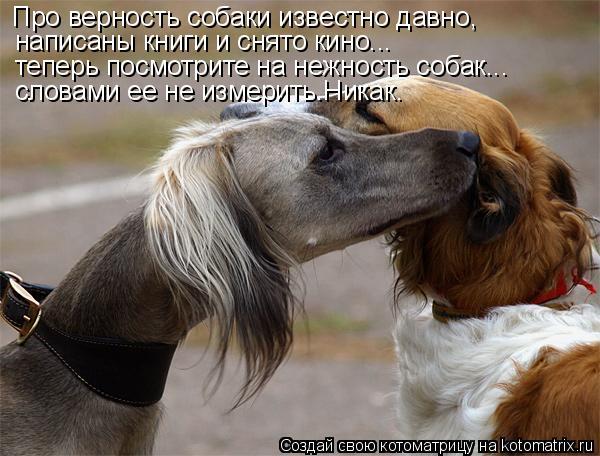 Котоматрица: Про верность собаки известно давно, написаны книги и снято кино... теперь посмотрите на нежность собак... словами ее не измерить.Никак.