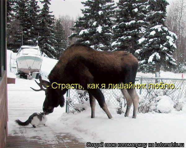 Котоматрица: - Страсть, как я лишайник люблю...