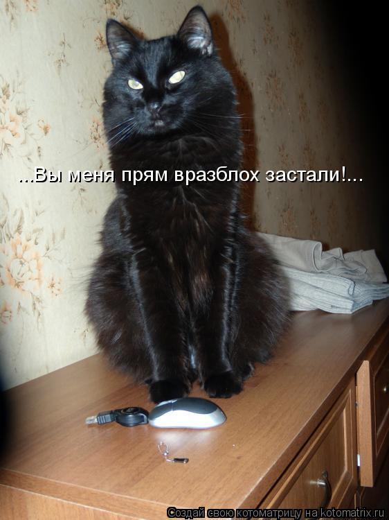 Котоматрица: ...Вы меня прям вразблох застали!...