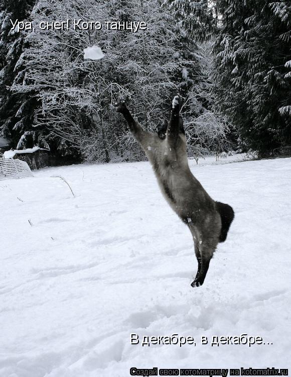 Котоматрица: Ура, снег! Котэ танцуе. В декабре, в декабре...