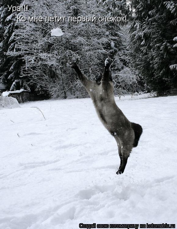 Котоматрица: Ура!!! Ко мне летит первый снежок!