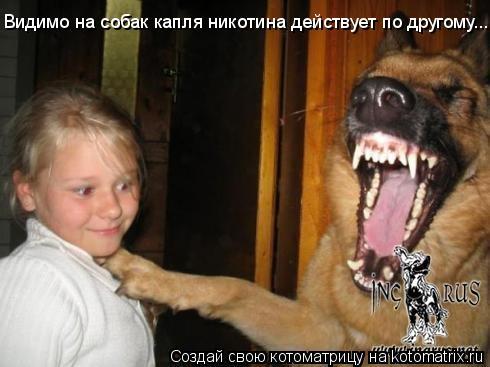 Котоматрица: Видимо на собак капля никотина действует по другому...