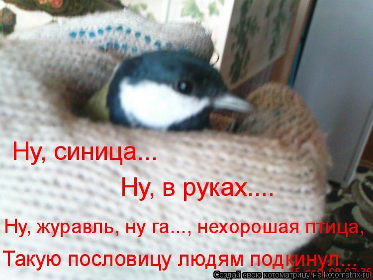 Котоматрица: Ну, синица... Ну, в руках.... Такую пословицу людям подкинул... Ну, журавль, ну га..., нехорошая птица,