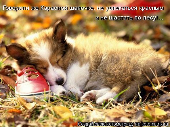 Котоматрица: Говорили же Карасной шапочке, не увлекаться красным и не шастать по лесу!...